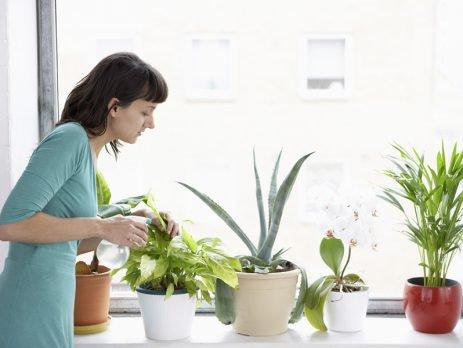 Cheio de charme e harmonia, um jardim dentro de casa é um sucesso e pode ser mais simples de fazer do que você imagina. Confira!