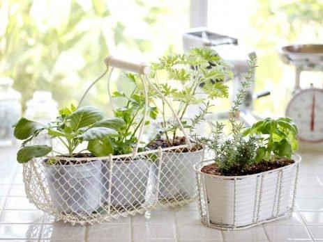 Ter algumas frutas, verduras e temperos sempre frescos em casa é fácil com uma mini-horta. Confira como ter uma e deixar seu lar ainda mais natural.